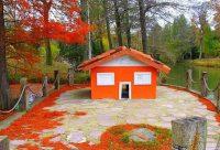 Ататюрк Дендрарий | Atatürk Arboretum