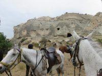 Центр верховой езды Акаль-Тэке | Akhal-Teke
