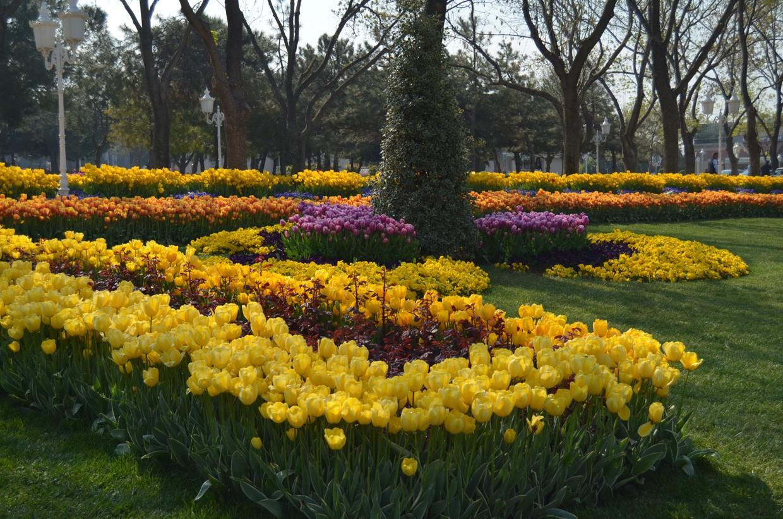 весна в стамбуле. тюльпаны